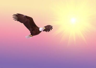 Finally, I can soar